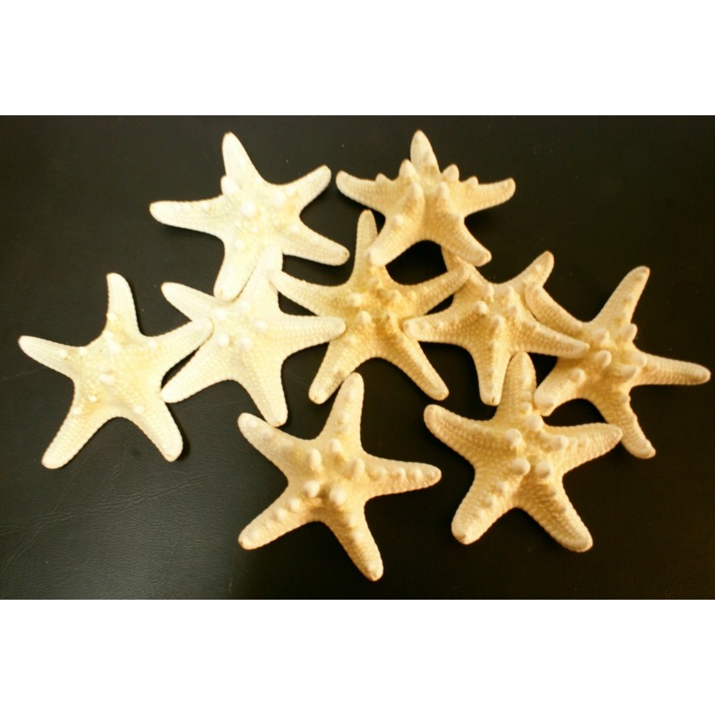 Estrella de mar natural japónica natural