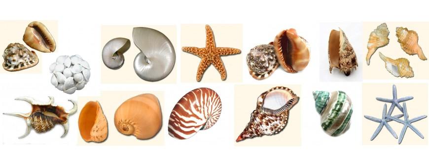 Conchas y caracolas de mar