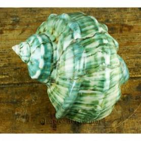 Turbo Marmoratus caracola del mar