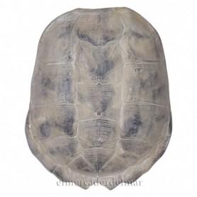 Reproducción caparazón de tortuga