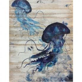 panel medusas
