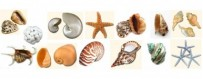 Conchas y caracolas de mar gran selección
